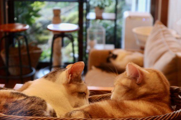 ▲「笑ねこの宿」のオシャレで清潔なねこカフェ
