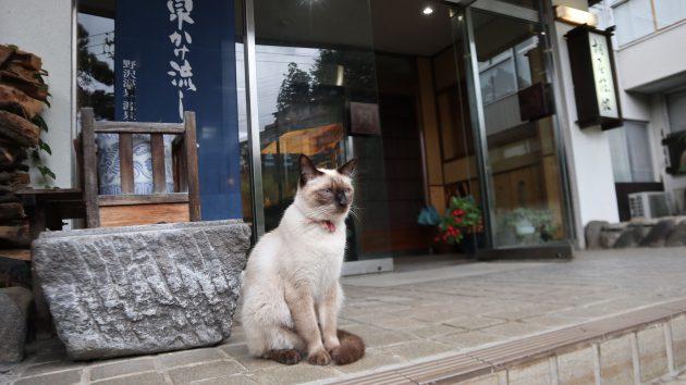▲猫のお出迎えがあるかもの桐屋旅館